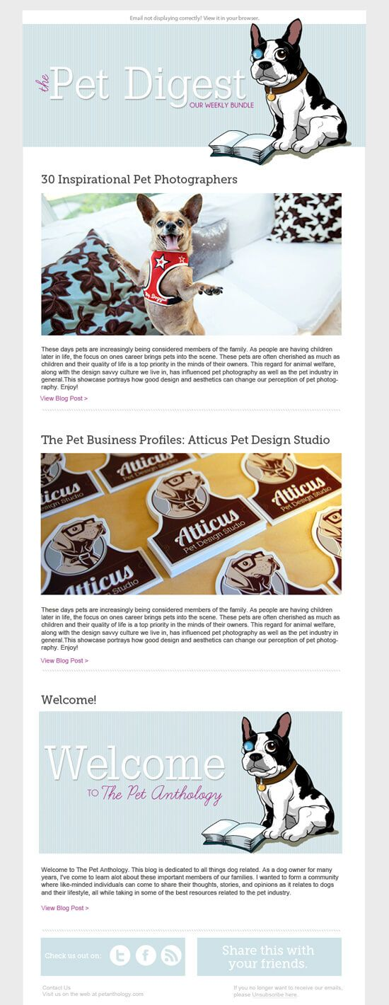 Newsletter Email Marketing Template